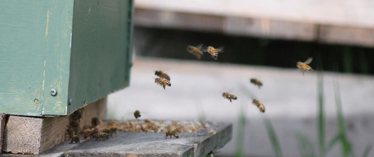 ENERGIA Roseroot Nettle Honey (100 ml)