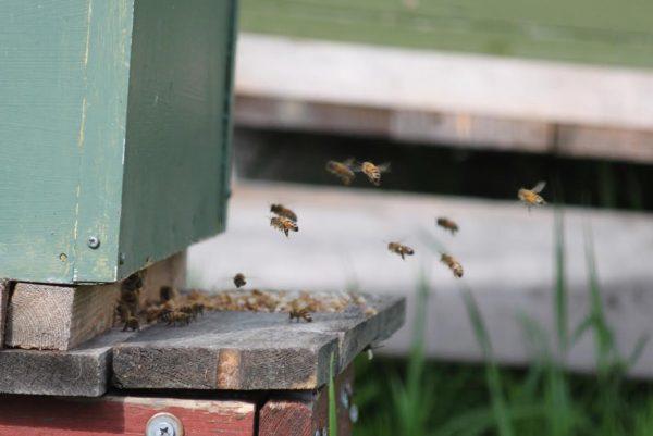 Kotimaista hunajaa