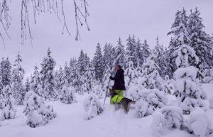 Metsänomistajat, metsä on muutakin kuin tukkipuuta!