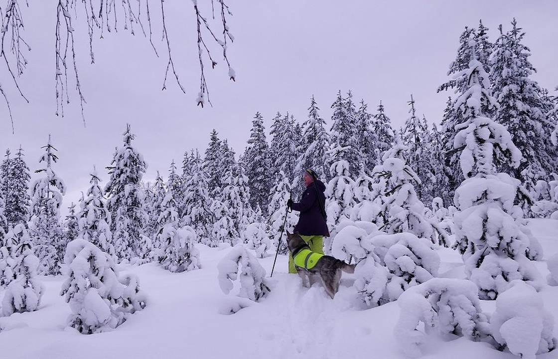 Metsällä ansaitseminen